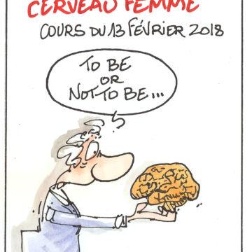 Cerveau homme versus cerveau femme